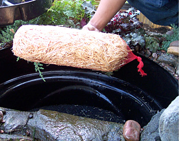 Related Keywords Suggestions For Koi Fish Pond Maintenance