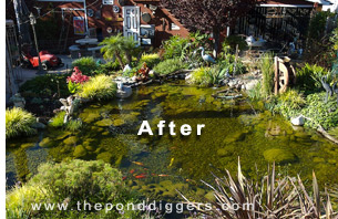 Pond Design Gone Wrong The Pond Digger