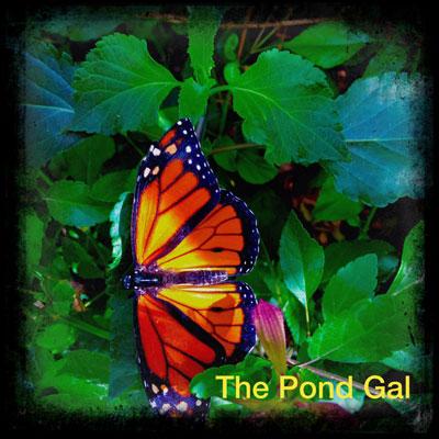 butterflyhybrid