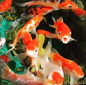 fish-square