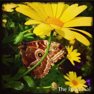 instabuttflower