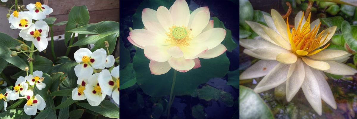 white-flower-banner