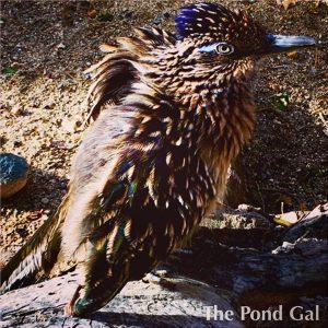 pineconebird