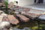 9 Things I Wish I Knew Before I Built My First Pond