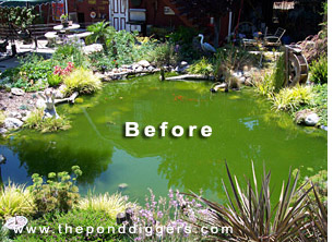 A Pond Gone Wrong Turned Around By The Pond Diggers