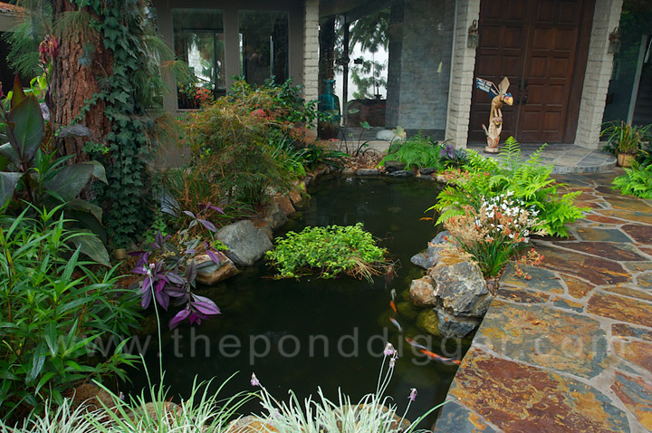 Koi pond design the pond digger for Small pond filter design