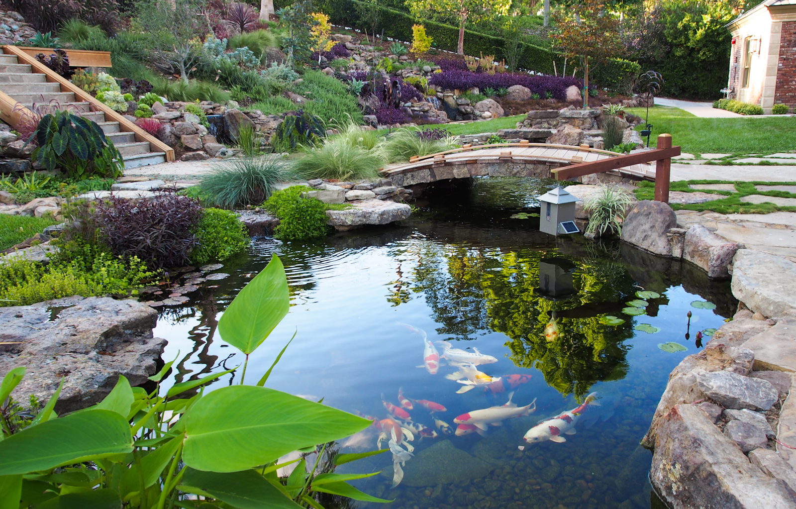 Blog the pond digger for Koi pool water gardens thornton