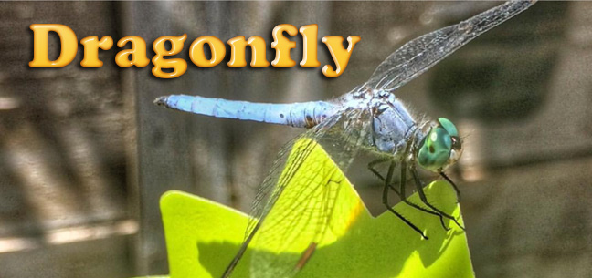 dragonfly-comparison