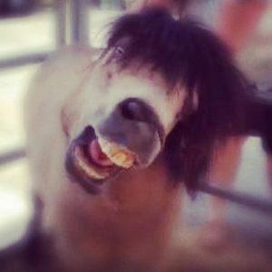 horse-face