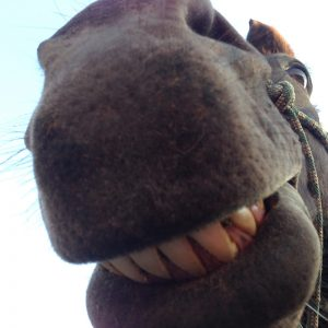 horse-funny