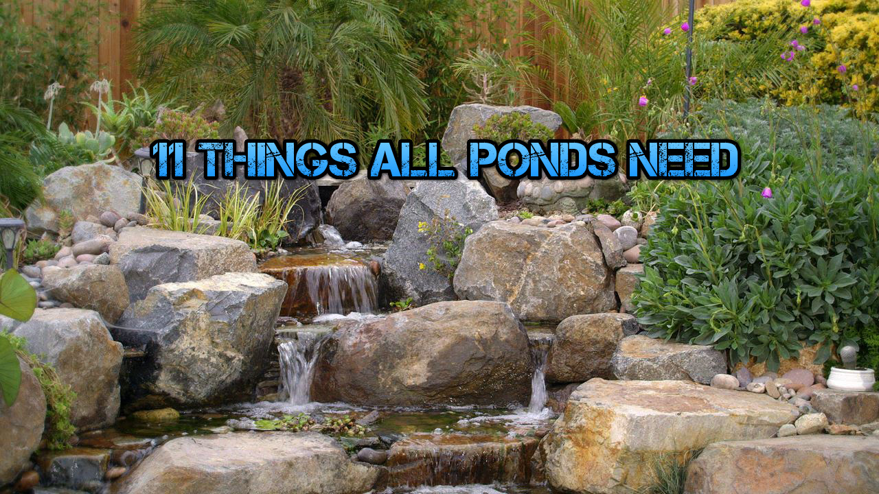 Koi fish the pond digger for What do you need for a koi pond