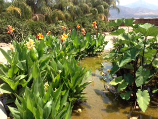 Blog The Pond Digger