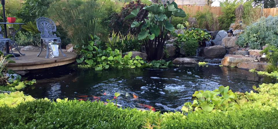 4 Simple Tricks To A Beautiful Pond