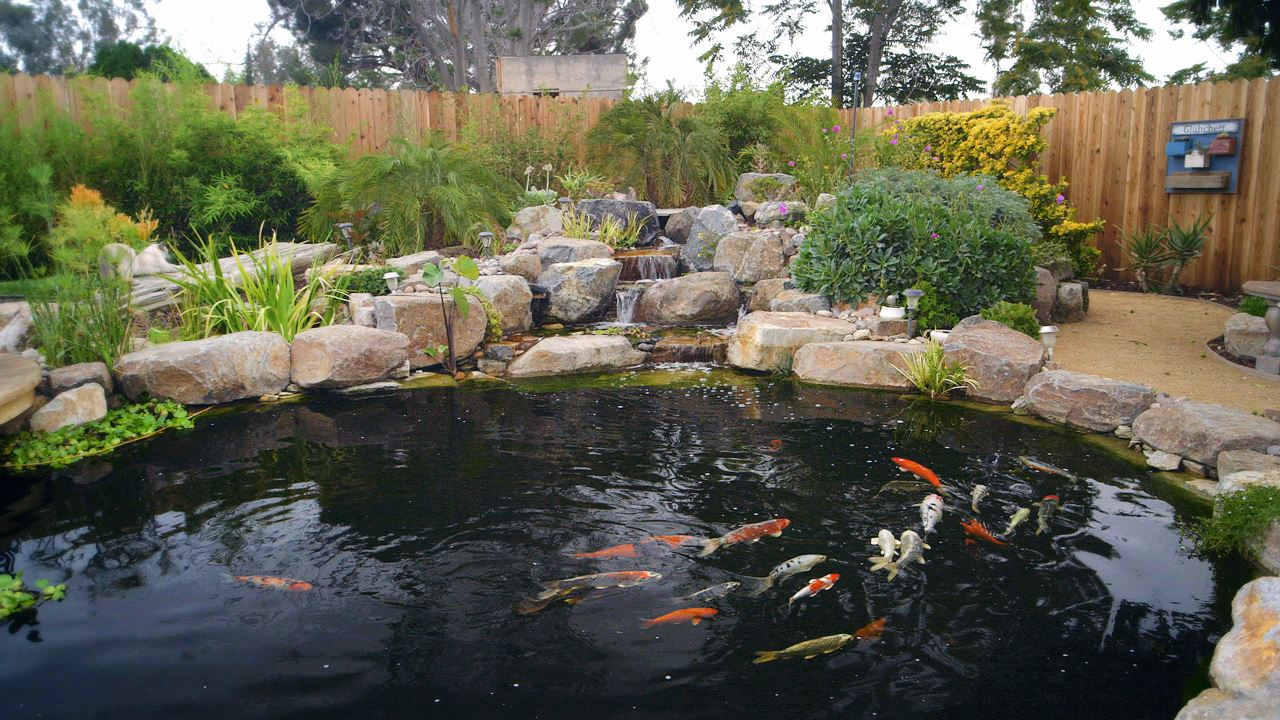 Blog the pond digger for Building a koi pond step by step