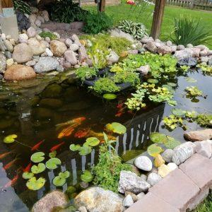 Ecosystem Pond Kits