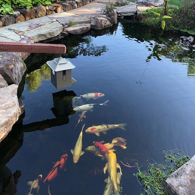 3 Winter Time Pond Risks The Pond Digger
